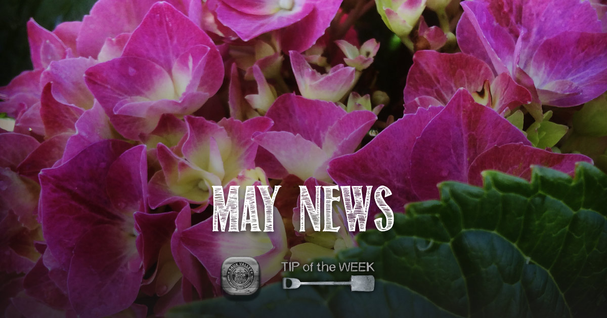 May News: Springfest this weekend, Veggie Tips, and Shop Small Saturday 2015