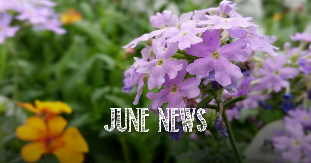 June News: Sterling Main Street Baskets, Giving Garden Update, Bud Tip, Perennial of the Week 2015