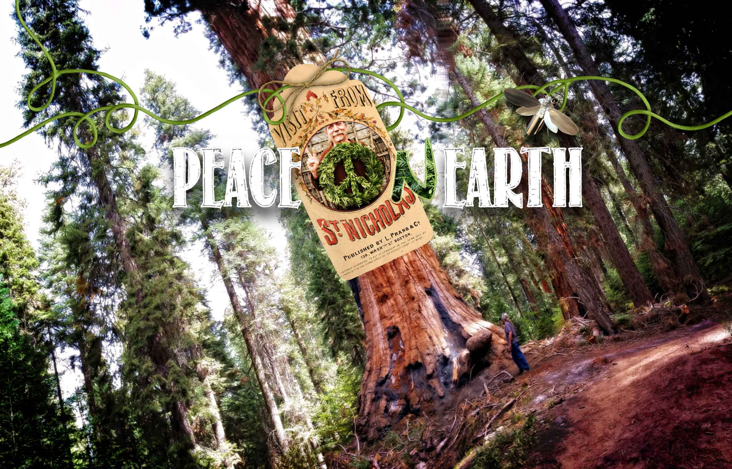 Peace on Earth and Big Trees