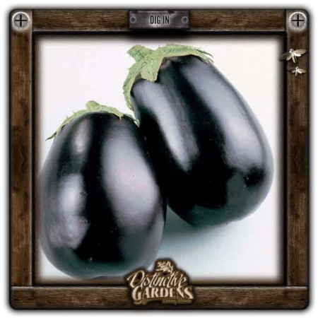 EGGPLANT Black Beauty 2