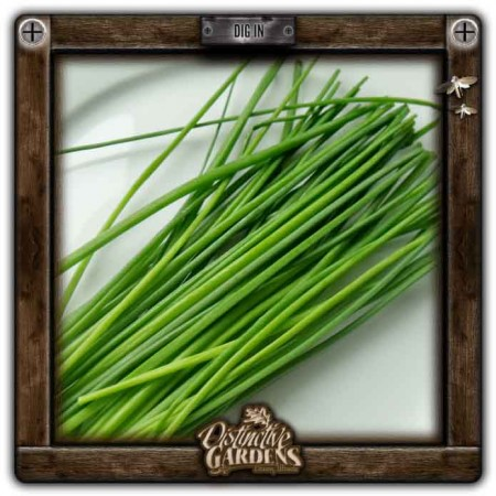 HERB Chives 2