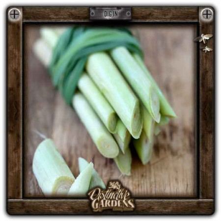 HERB Lemongrass 2