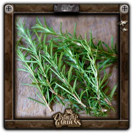 HERB Rosemary 4