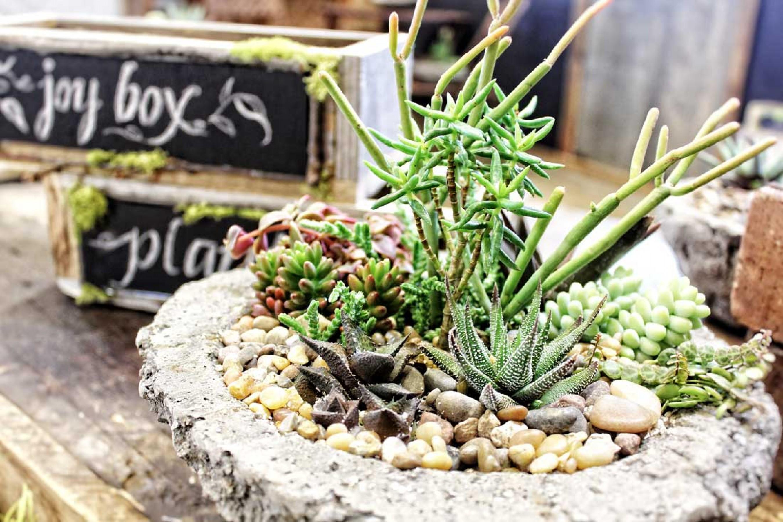 Plant Lookbook